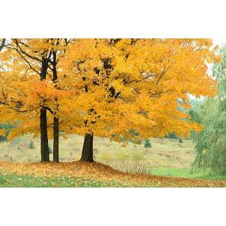 Fall Wedding | Autumn Wedding