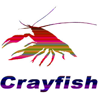 Crayfish-17