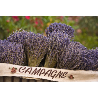 Bunches of lavender for sale, Vence, Provence,
