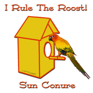 Rule The Roost Sun Conure