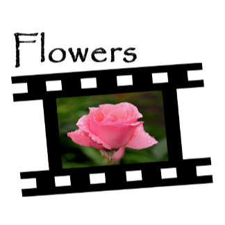 Flowers - Floral