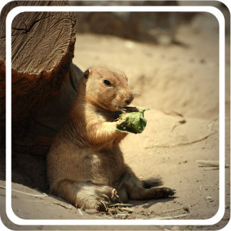 Prairie Dog Hanging Out