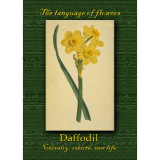 Floral - The Language of Flowers