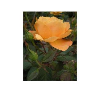 Orange Rose Designs