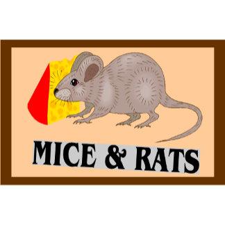 Mice & Rats