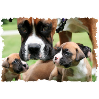 Boxer - Helicopter Mom