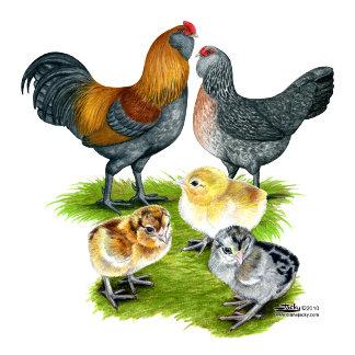 Ameraucana Chicken Family