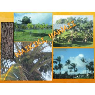 HAWAII COLLAGE #9