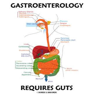 Gastroenterology Requires Guts (Digestive System)