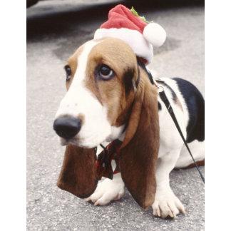 Holiday Pets | Christmas Pets | Xmas Pets