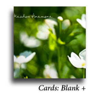 : Cards: Blank +