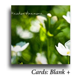 : Cards: Blank +
