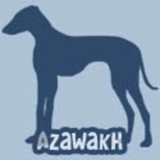 Azawakh
