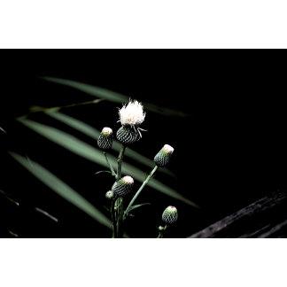 florida wildflower white bud dark back
