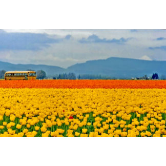 Yellow Tulips and School Bus