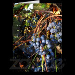 concord_grapes_card-p1377874469869940644pd3_525.jp