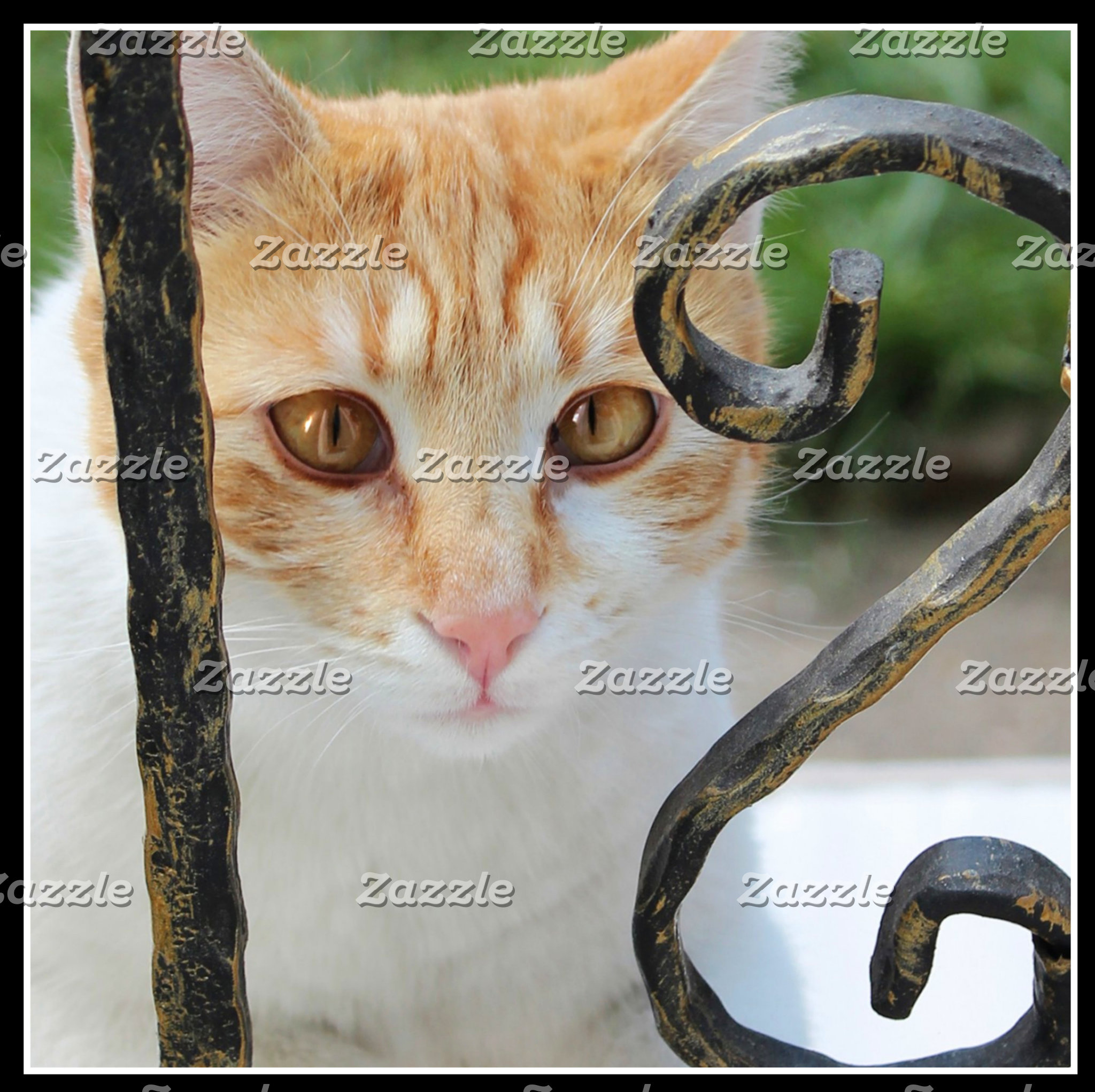 Orange Tabby Cat 4