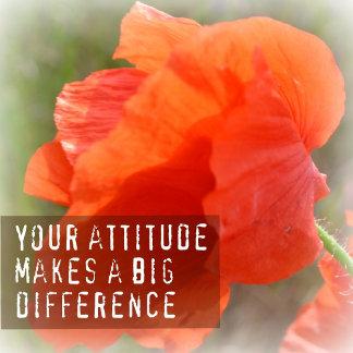 Attitude Difference Poppy