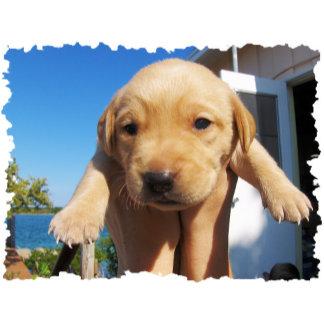 Labrador Puppy - Good Morning!