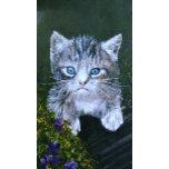Kitty.jpg.JPG