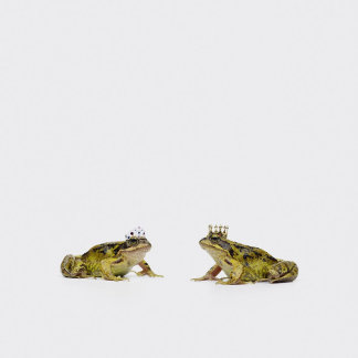 a king and queen frog looking at each other