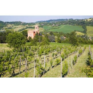Italy, Bologna, View through Vineyard to Chiesa