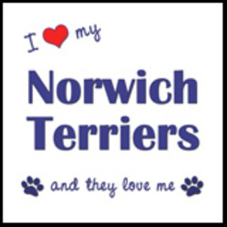 I Love My Norwich Terriers (Multiple Dogs)