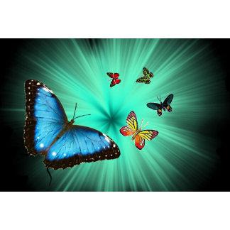 A Butterflys Journey