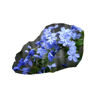 Blue Plumbago Flowers Cascade Photo