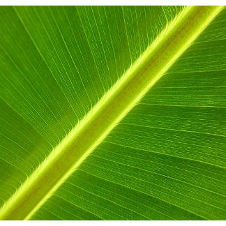 Cases & more - Green Leaf Macro -