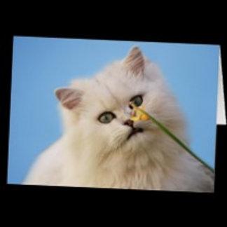 * Cats/ Kittens