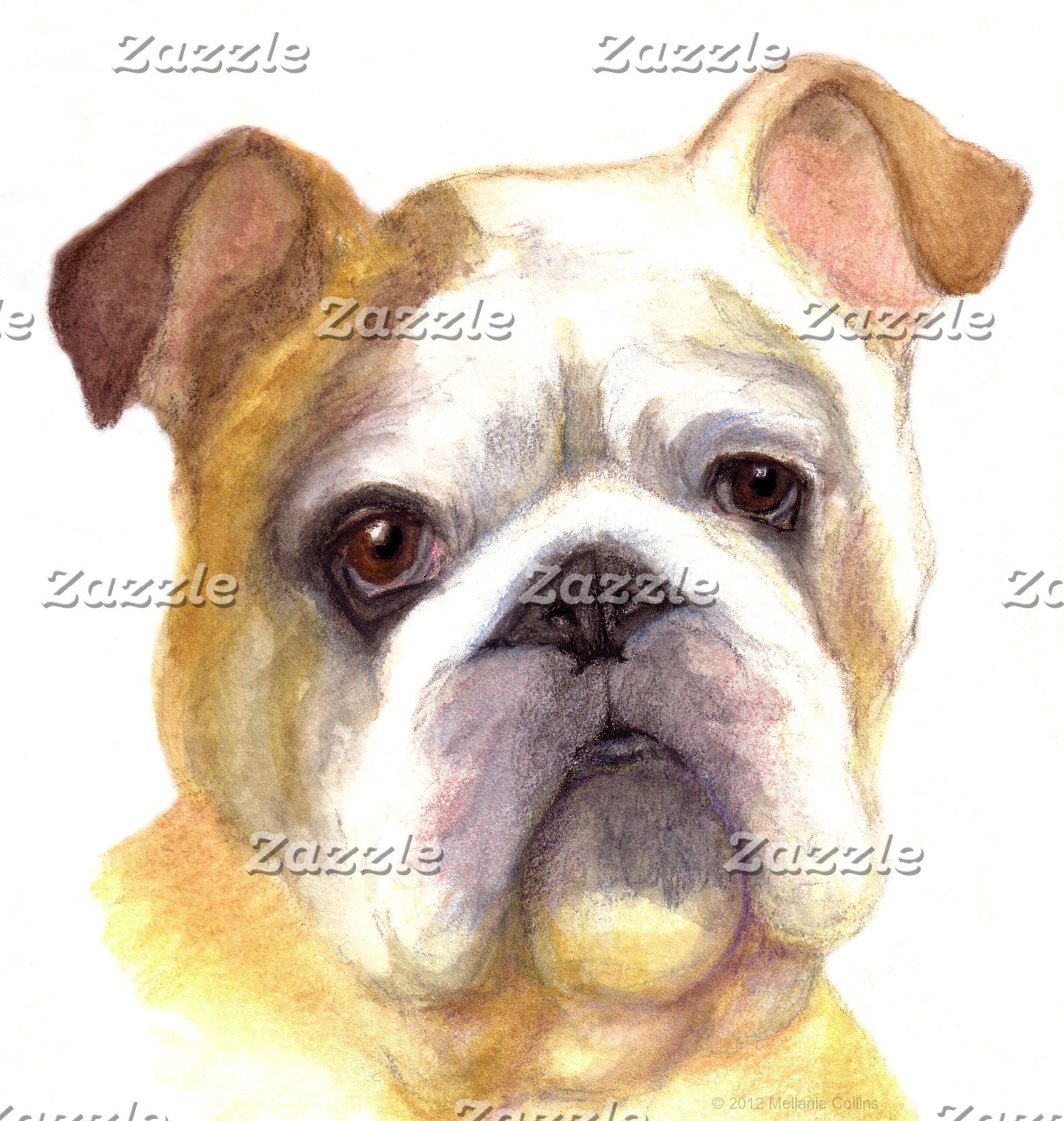 Colored Pencil Bulldog