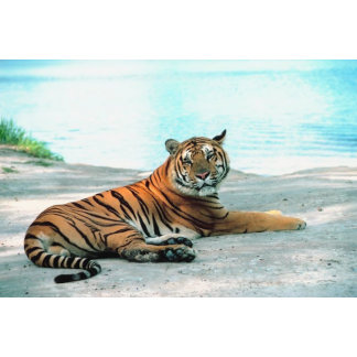 Tiger Lounge