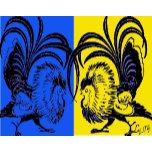 pissed rooster.jpg