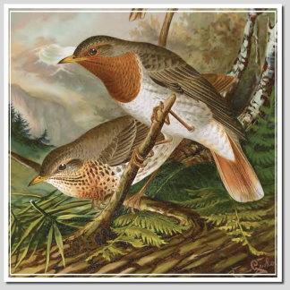 BIRDS T - V