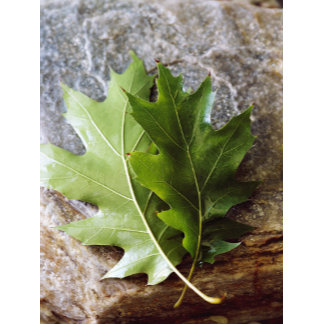 """""""leaves on rock poster print"""