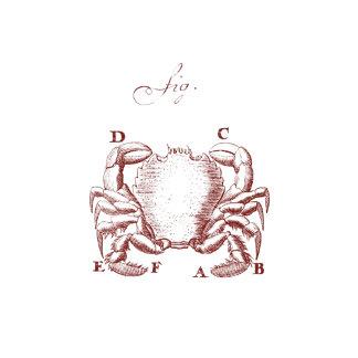 Crab Illustration (Vintage)