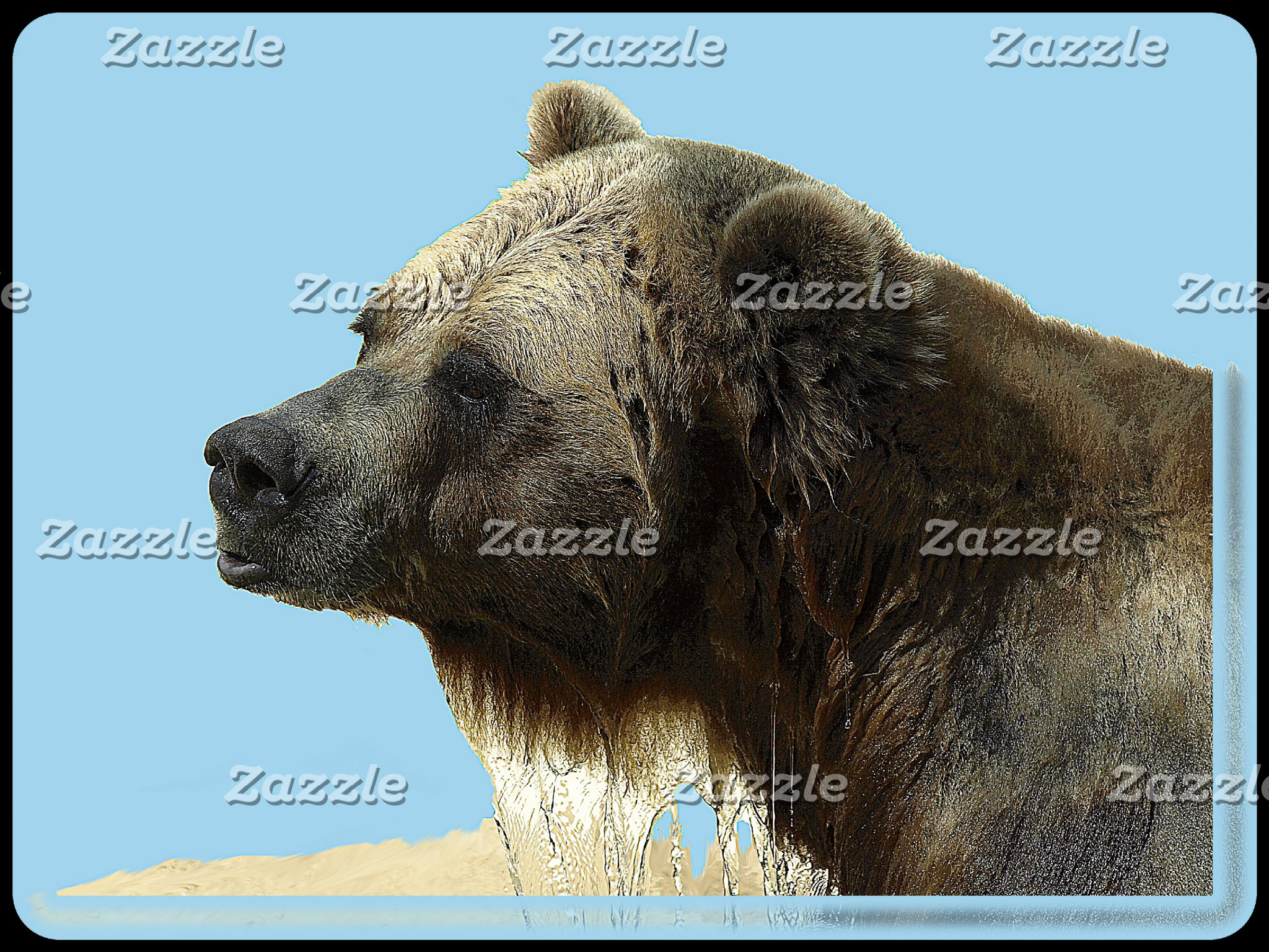 BEARS and POLAR BEARS