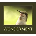 Wonderment Poster.jpg