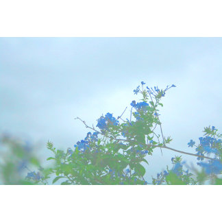 faded blue flowers green stems