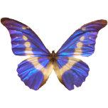 pillango.png