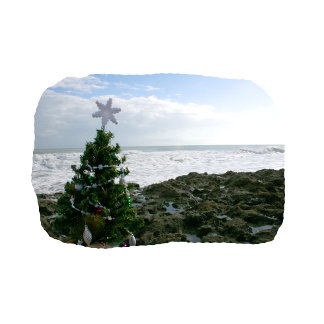Christmas Tree Against Beach Rocks copy