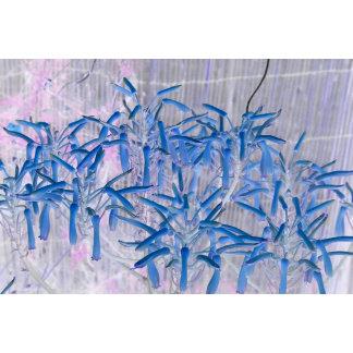blue succulent flowers invert image