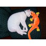 Spirit + lizard2.jpg