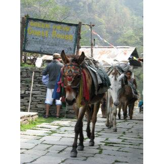Donkey crossing