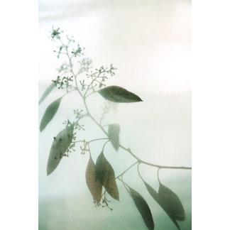 """Eucalyptus leaves-flowers poster print"""