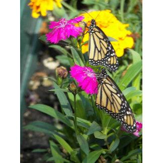 Monarch Twins #2