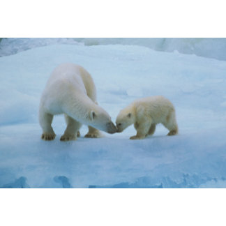North America, Canadian Arctic. Polar bear and