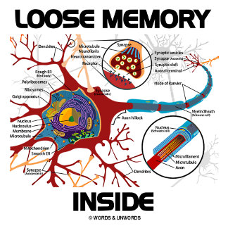 Loose Memory Inside (Neuron / Synapse)