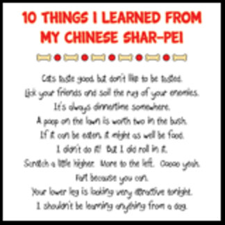 10 Things I Learned From My Chinese Shar-Pei Joke